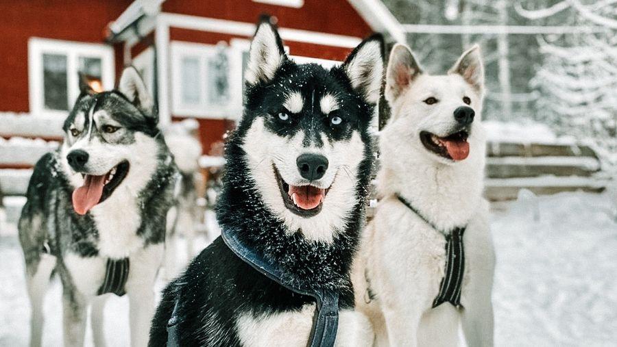 Mit dem Hund durch den Winter | KohlenStoff von CharLine