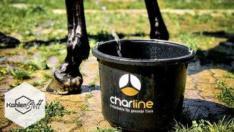 HOT HOT HOT | Schweißtreibende Zeit im Pferdestall | KohlenStoff powered by CharLine GmbH
