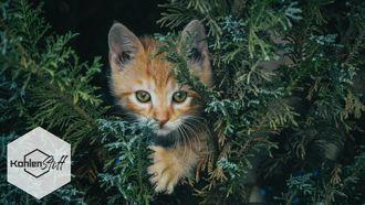 Veni, vidi, vici | Die Futterkohle im Test bei Katzen! | KohlenStoff von CharLine