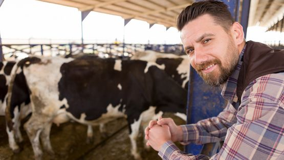 Futterkohle für Rinder