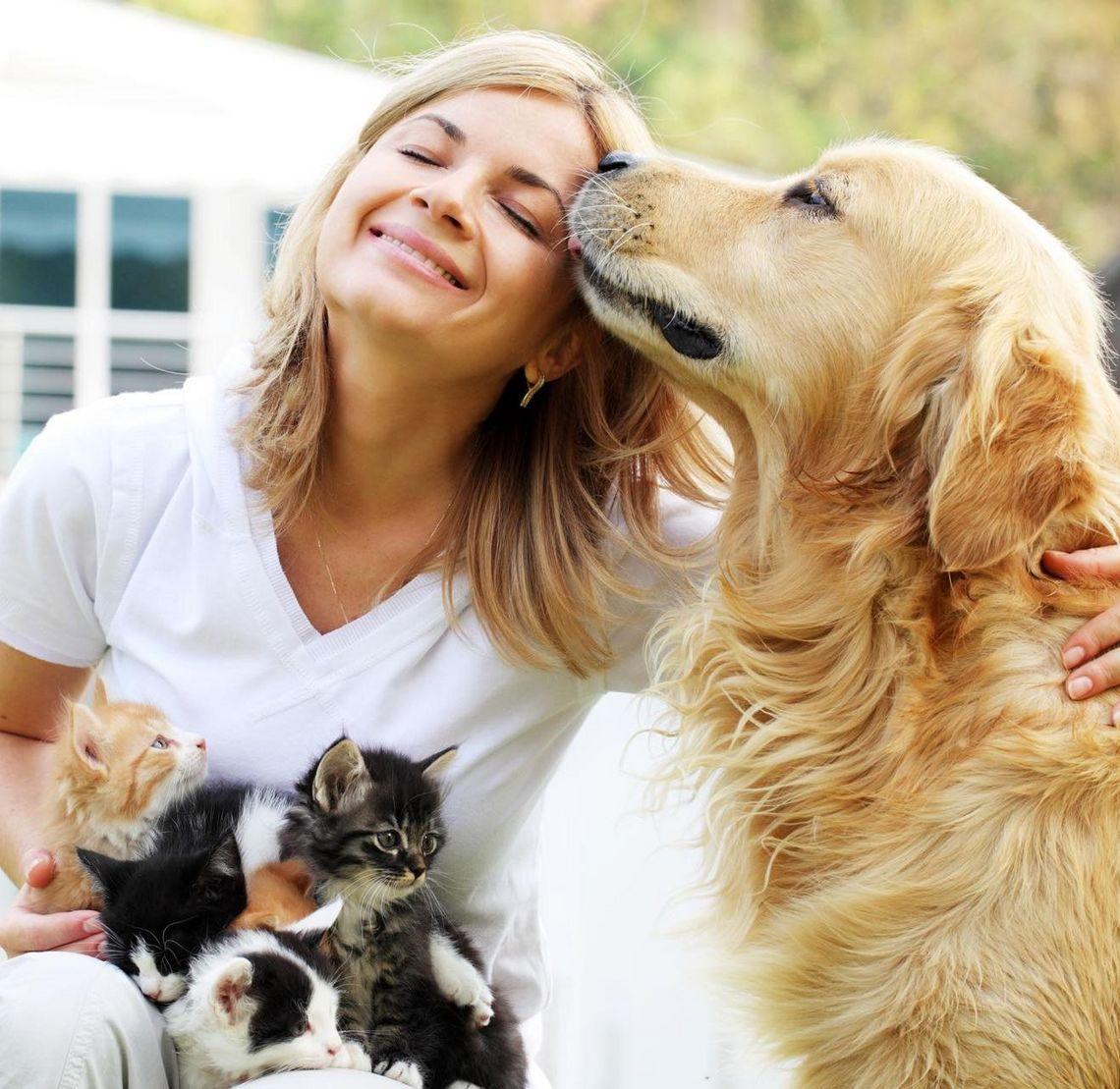Futterkohle für Hunde und Katzen