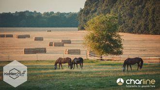 Richtiges Verhalten mit Pferd & Hund in der Erntezeit | KohlenStoff powered by CharLine GmbH