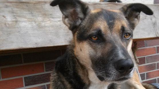 Erfahrungsbericht Reimo Hagner, Futterkohle für Hunde