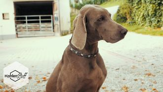 Anwender Video Hund | CharLine Futterkohle