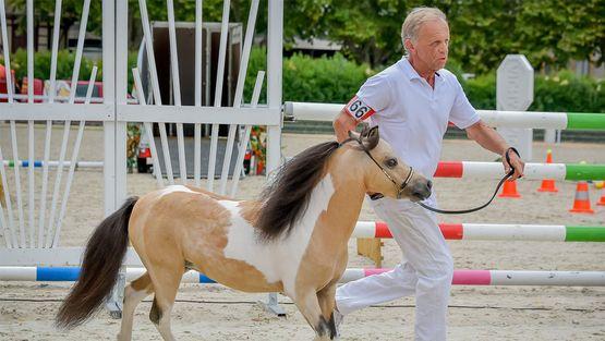 Erfahrungsbericht Dream Sweet by T, Futterkohle für Pferde
