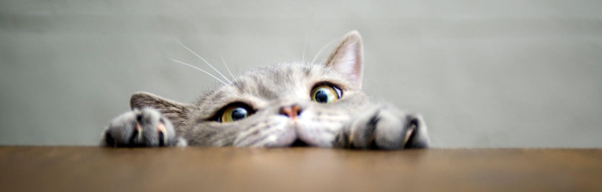 Futterkohle für Katzen