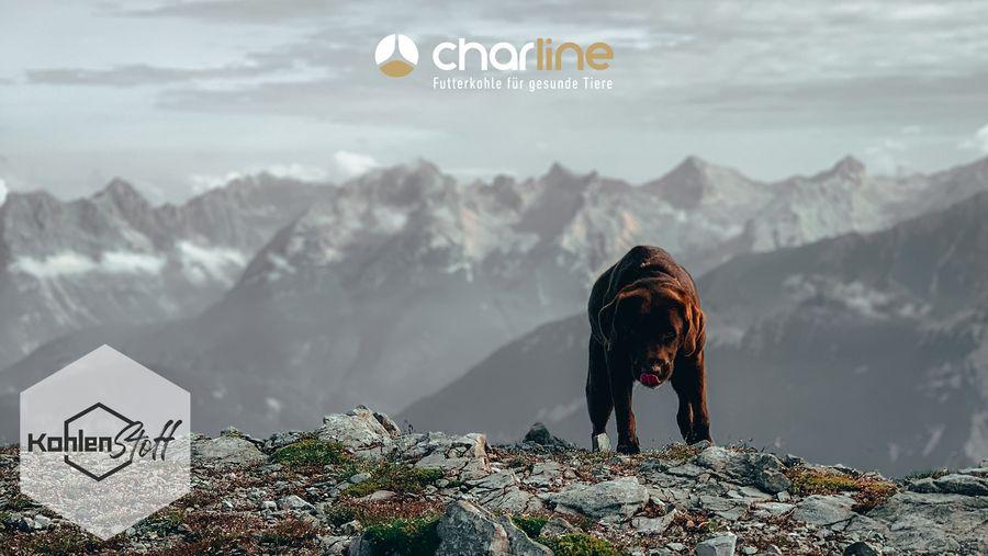 Ist Dein Hund ein Bergfex? | KohlenStoff powered by CharLine GmbH