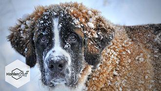 Kein Frust beim Frost | KohlenStoff von CharLine