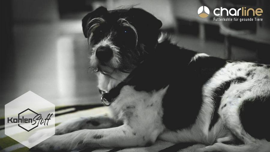 Old but gold | Der Hunde-Senior | KohlenStoff powered by CharLine GmbH
