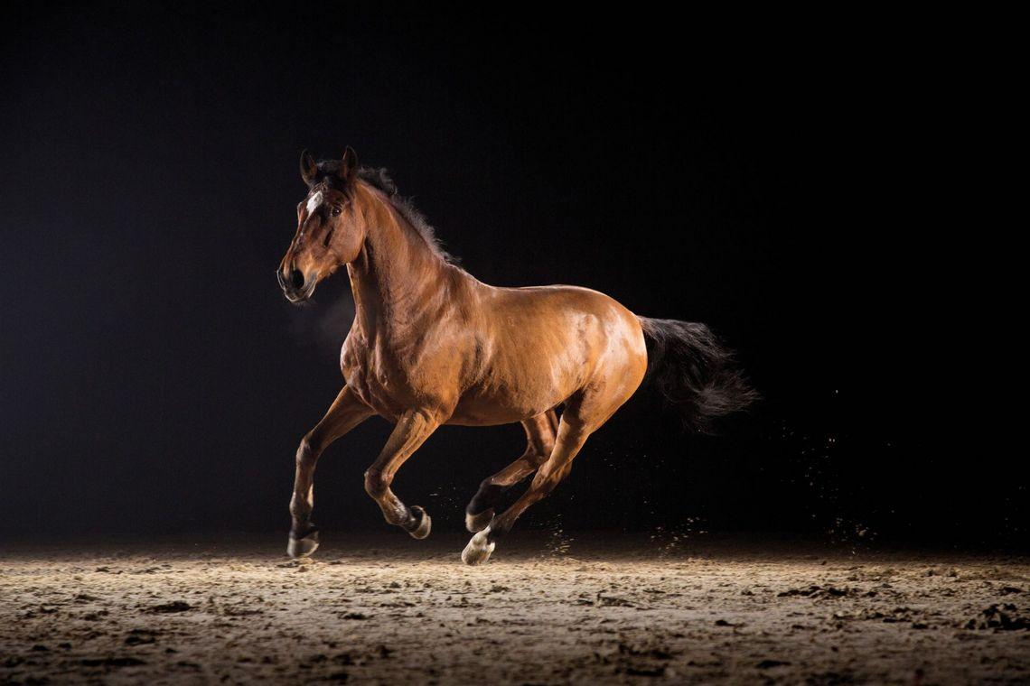 Futterkohle für Pferde
