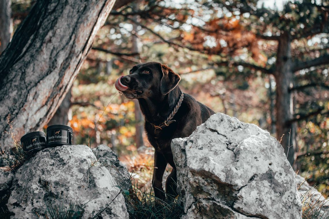 Futterkohle für Hunde