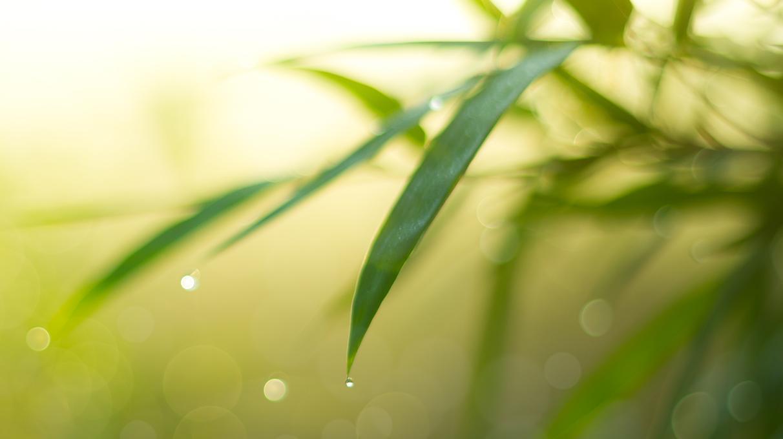 CharLine Güllekohle - Für grünere Pflanzen