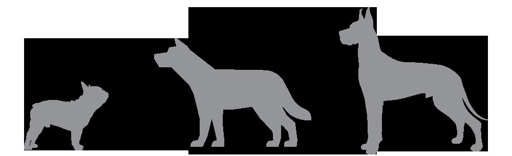 Futterkohle für Hunde in verschiedenen Größen