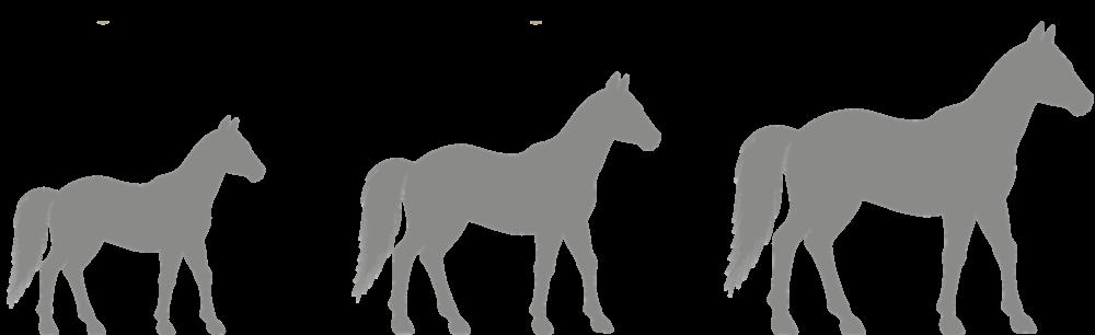 Futterkohle für Pferde in verschiedenen Größen