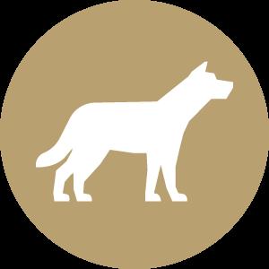 Futterkohle für Hunde Button | CharLine GmbH