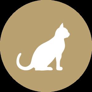 Futterkohle für Katzen Button | CharLine GmbH