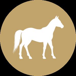 Futterkohle für Pferde Button | CharLine GmbH