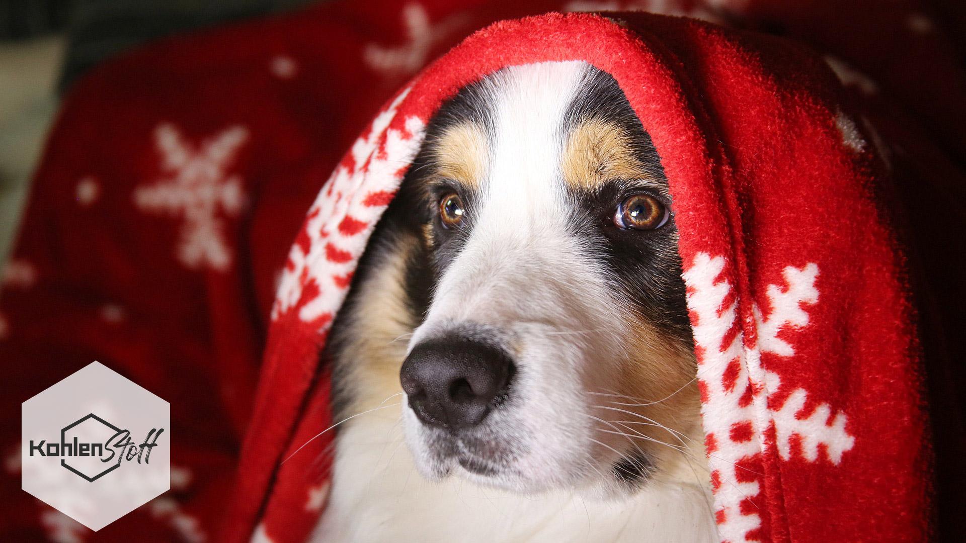 Weihnachten mit Hund | KohlenStoff von CharLine
