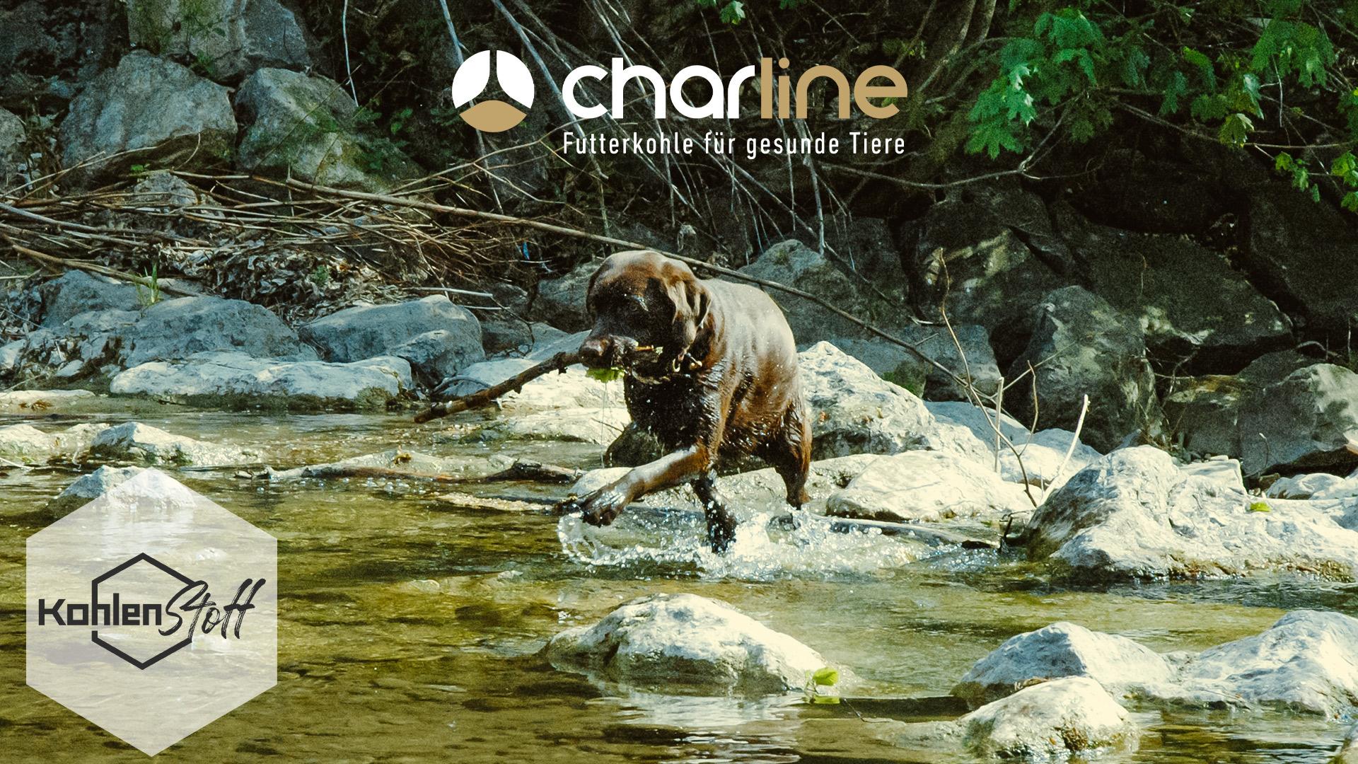 Badespaß mit Hund | KohlenStoff powered by CharLine GmbH