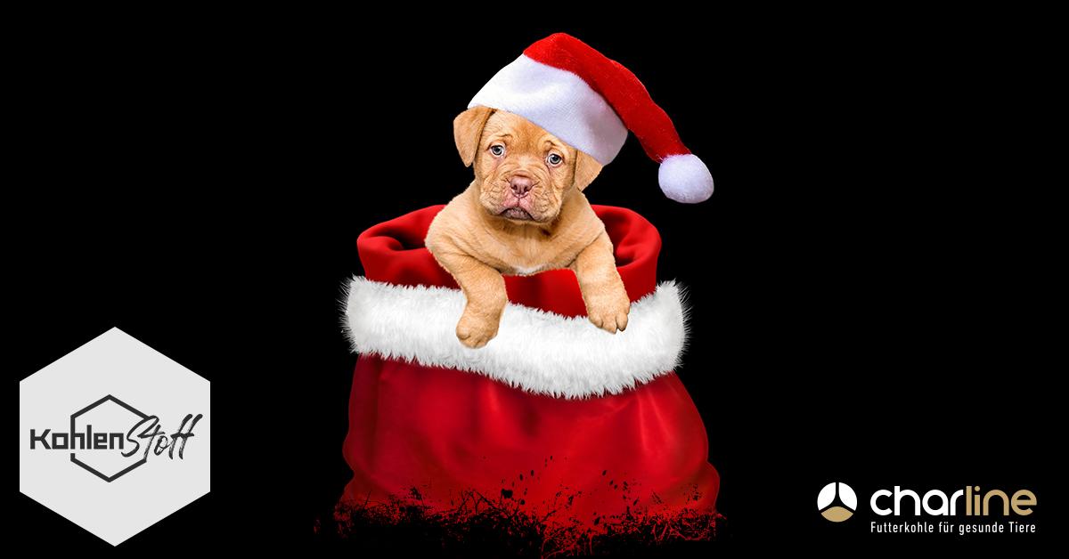 Alle Jahre wieder?! | (K)ein Tier zu Weihnachten | KohlenStoff powered by CharLine GmbH